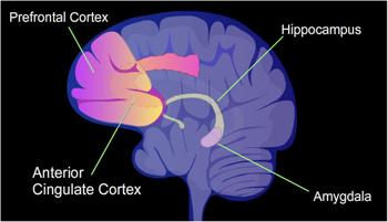 Attention Deficit Disorder & Adrenal Hormones   Dr  Timothy
