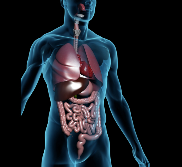 When in Doubt, Treat the Gut: Elimination Diet, Probiotics, and StoolTesting
