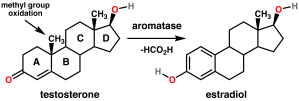 testosterone - aromatse
