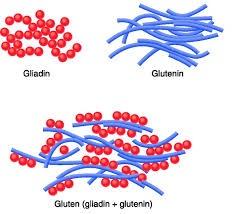 Gluten = Gliadin + Glutenin
